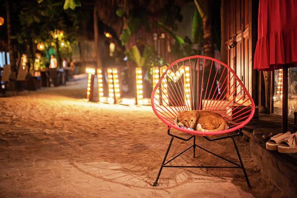 Photograph - Tulum Sleepy Orange Cat Tulum Mexico Mx by Toby McGuire