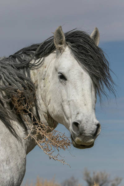 Photograph - Tumbleweed Stallion by Kent Keller