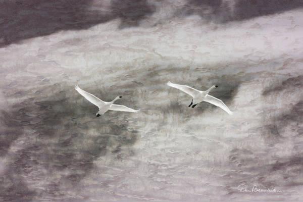 Photograph - Tundra Swans Impression 6752 by Dan Beauvais