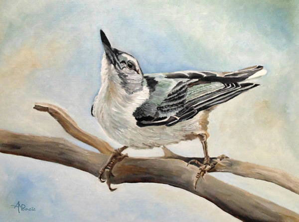 Painting - Tuning In - White-breasted Nuthatch by Angeles M Pomata