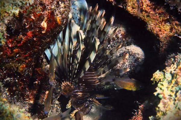 Pokes Wall Art - Photograph - Turkey Fish by Christina Ford