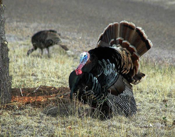 Photograph - Turkey by Karen Slagle