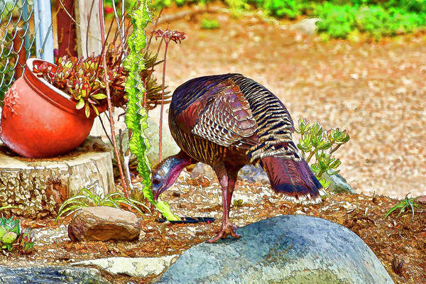 Pheasant Digital Art - Turkey Pecking 1 Abstract   by Linda Brody