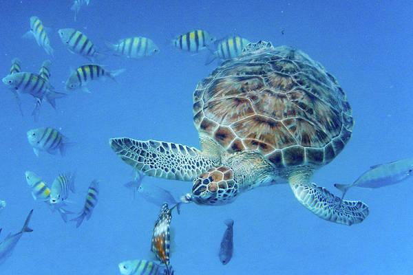 Turning Turtle Art Print