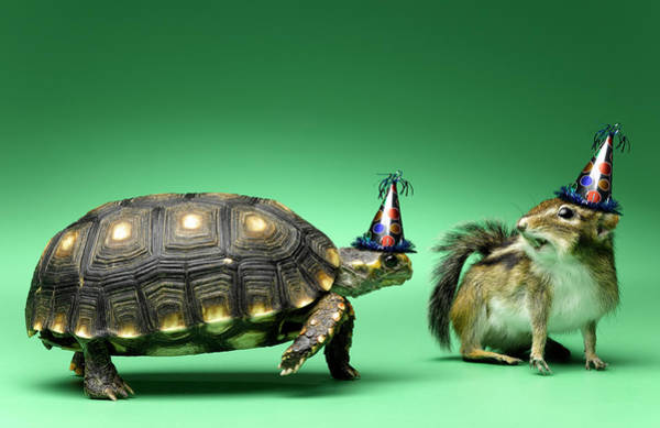 Chipmunk Photograph - Turtle And Chipmunk Wearing Party Hats by Jeffrey Hamilton