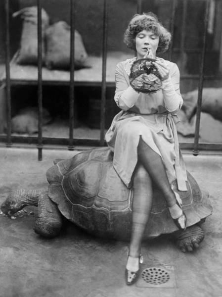 Cage Photograph - Turtle And Make-up by General Photographic Agency