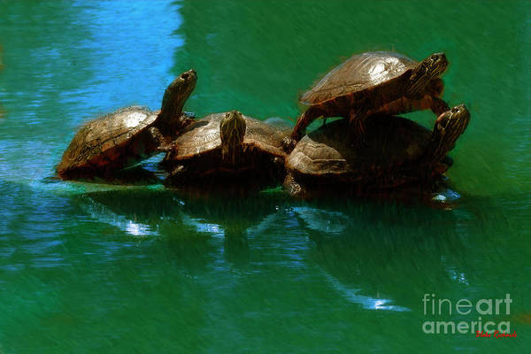 Photograph - Turtle Family Portrait by Blake Richards