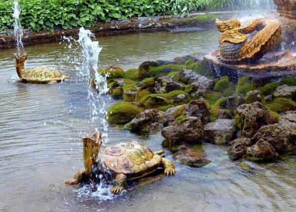 Wall Art - Photograph - Turtle Fountains by Barbie Corbett-Newmin