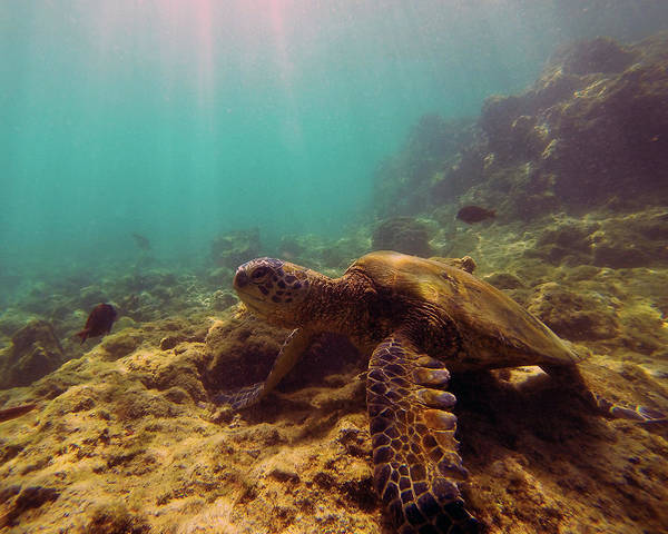 Photograph - Turtle On The Rocks by Anthony Jones