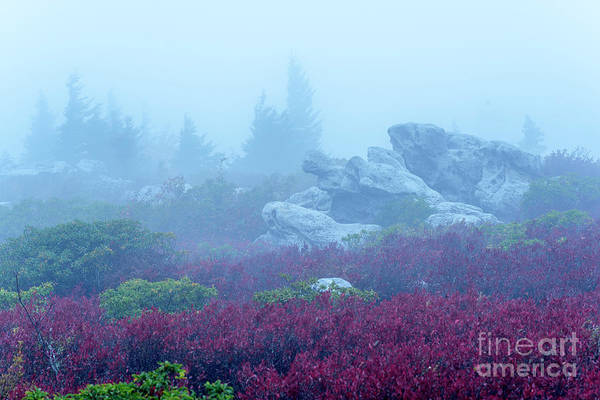 Photograph - Turtle Rock In The Mist by Thomas R Fletcher