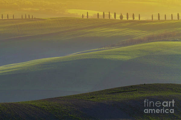 Wall Art - Photograph - Tuscan Hilly Scenery With Cypress Trees by Heiko Koehrer-Wagner