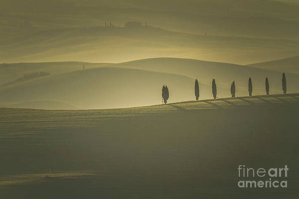 Photograph - Tuscan Scenery With Cypress Trees by Heiko Koehrer-Wagner