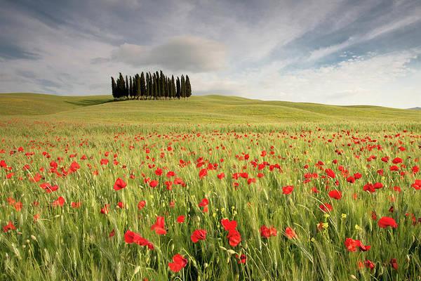 Tuscany Photograph - Tuscany Cypress by Michele Berti
