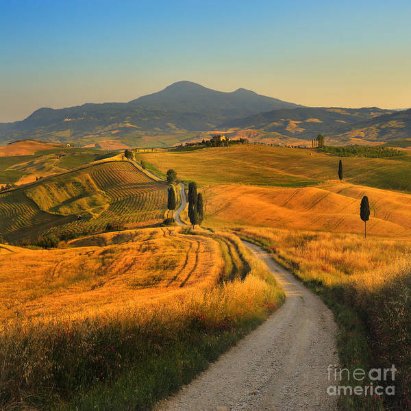 Wall Art - Photograph - Tuscany, Cypress Road by Jaroslaw Pawlak