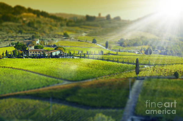 Vines Wall Art - Photograph - Tuscany Landscape, Italy by Cate 89