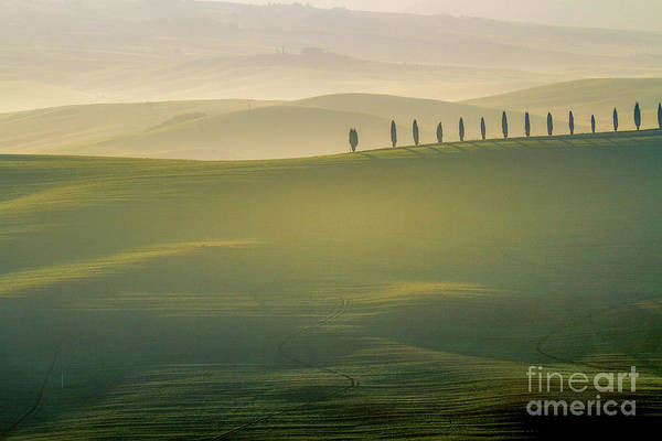 Photograph - Tuscany Landscape With Cypress Trees by Heiko Koehrer-Wagner