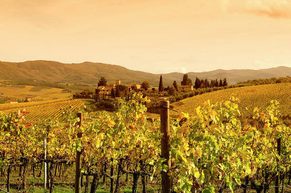 Cultivate Photograph - Tuscany Village And Vineyard In Fall At by Lisa-blue