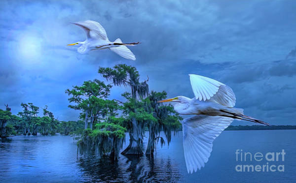Photograph - Twilight Egrets At Blue Cypress Lake. by Brian Tarr