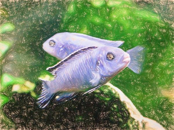 Digital Art - Twin Blue Zebra Cichlids Colored Pencil by Don Northup