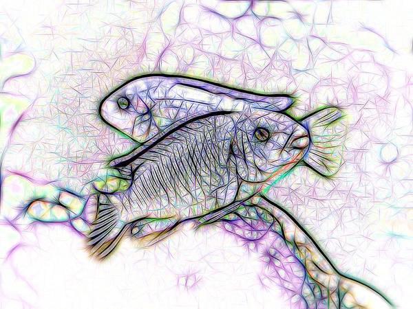 Digital Art - Twin Blue Zebra Cichlids Line Art by Don Northup