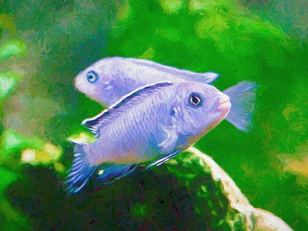 Digital Art - Twin Blue Zebra Cichlids Pen by Don Northup