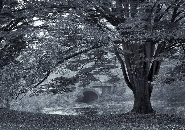 Photograph - Twin Lake Mist by Jessica Jenney