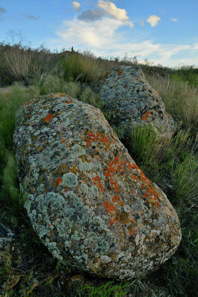 Photograph - Twin Lichen Covered Boulders In Book Cliffs by Ray Mathis