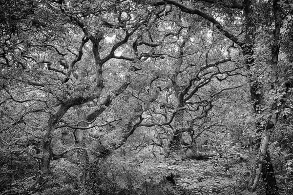 Photograph - Twisted Forest by Nathan Bush
