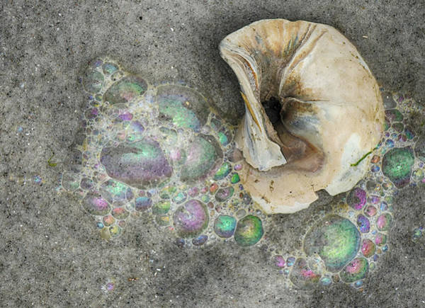 Photograph - Twisted Shell And Bubbles by Cate Franklyn