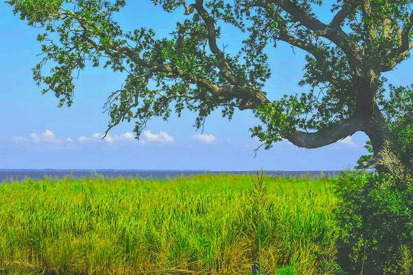 Photograph - Twisty Tree by Jeremy Guerin
