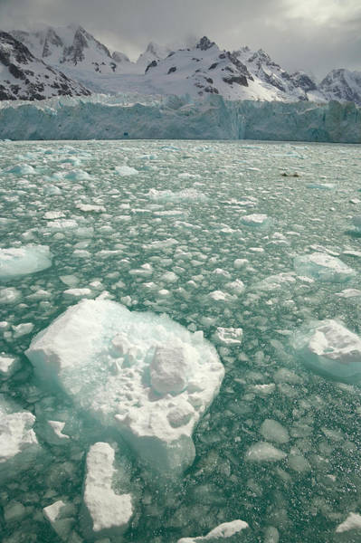Georgia Photograph - Twitcher Glacier, Floating Ice And Sea by Eastcott Momatiuk