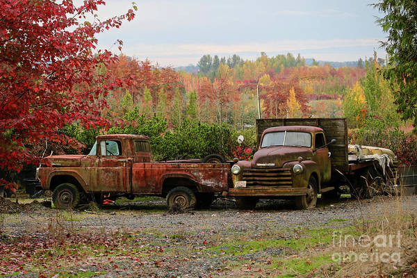 Wall Art - Painting - Two Autumn Vintage Trucks by American School