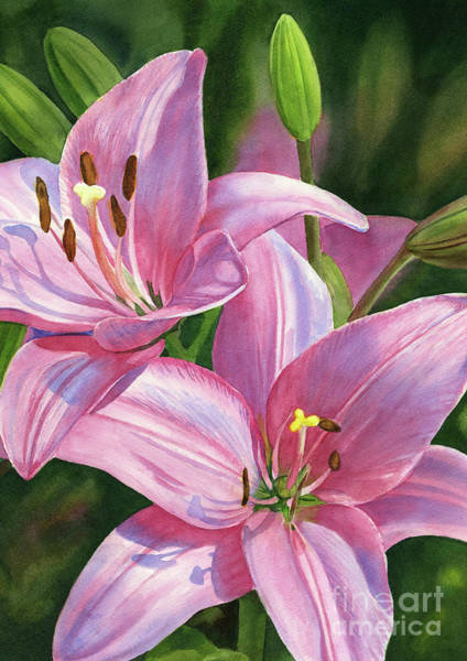 Wall Art - Painting - Two Brilliant Pink Lilies With Buds by Sharon Freeman