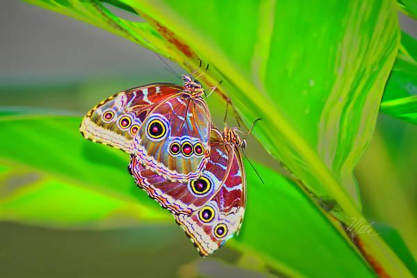 Photograph - Two Butterflies by Meta Gatschenberger