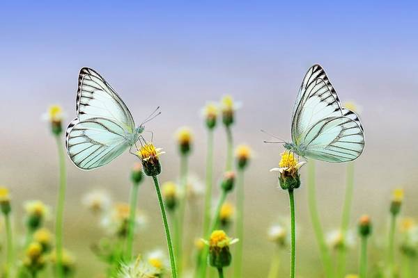 Photograph - Two Butterflies by Top Wallpapers