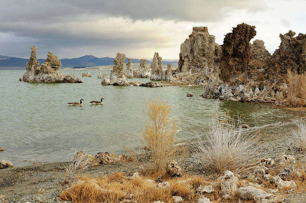 Waters Edge Photograph - Two Canadian Gooses On Mono Lake by Rezus