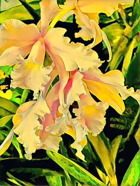 Photograph - Two Cattleya Orchids Aloha by Joalene Young