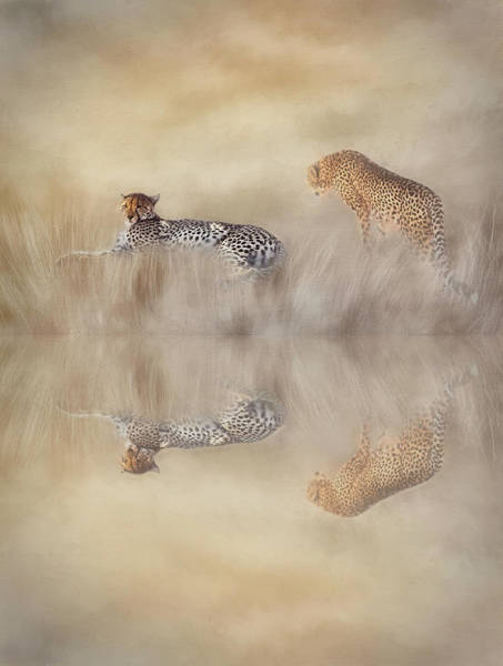 Wall Art - Photograph - Two Cheetahs by Donna Kennedy