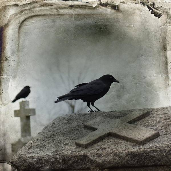 Wall Art - Photograph - Two Crows On A Gray Winter Day by Gothicrow Images