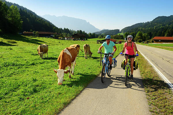 Wall Art - Photograph - Two Cyclists On Bicycle Lane Next To Cows On The Pasture Priental Cycle Path Near Sachrang Chiemgau by imageBROKER - Norbert Eisele-Hein