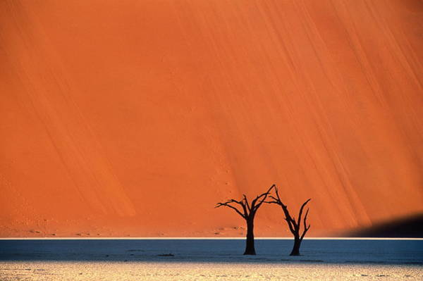 Wall Art - Photograph - Two Dead Trees In Shadow Of Massive by Theo Allofs