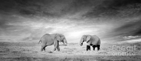 Wall Art - Photograph - Two Elephant In The Wild - National by Volodymyr Burdiak