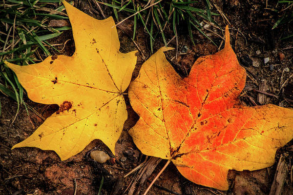 Photograph - Two Fall Leaves by Don Johnson