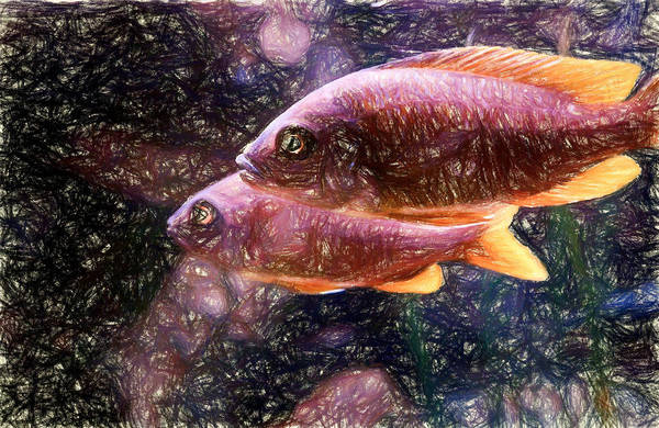 Digital Art - Two Female Red Fin Borleyi by Don Northup