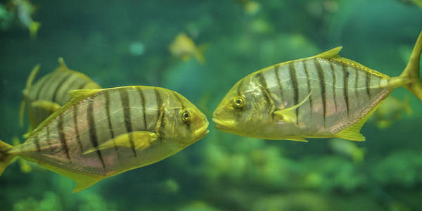 Wall Art - Photograph - Two Fishes Talking by Art Spectrum