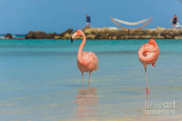 Two Flamingos On The Beach Art Print