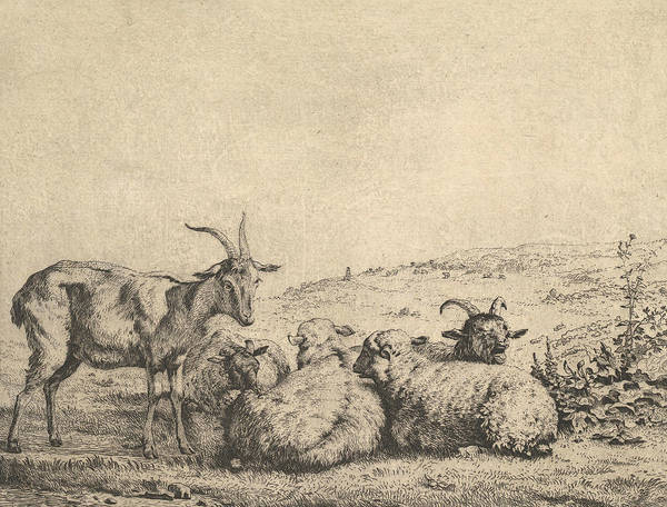 Wall Art - Relief - Two Goats And Three Sheep by Karel Dujardin