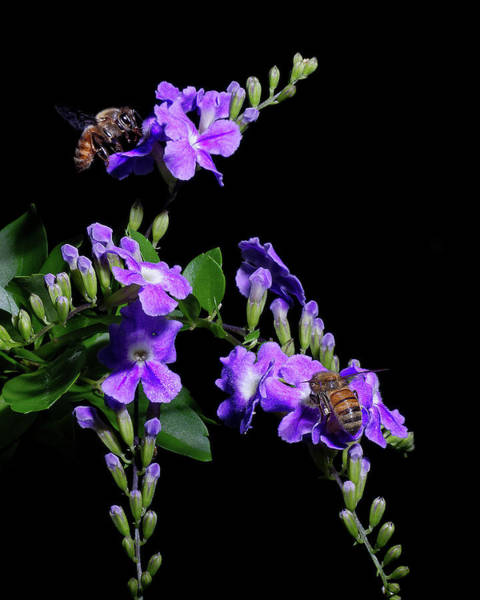 Wall Art - Photograph - Two Honeybees by Richard Rizzo