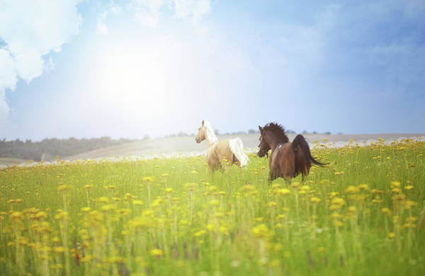 Wall Art - Photograph - Two Horses by Arman Zhenikeyev - Professional Photographer From Kazakhstan