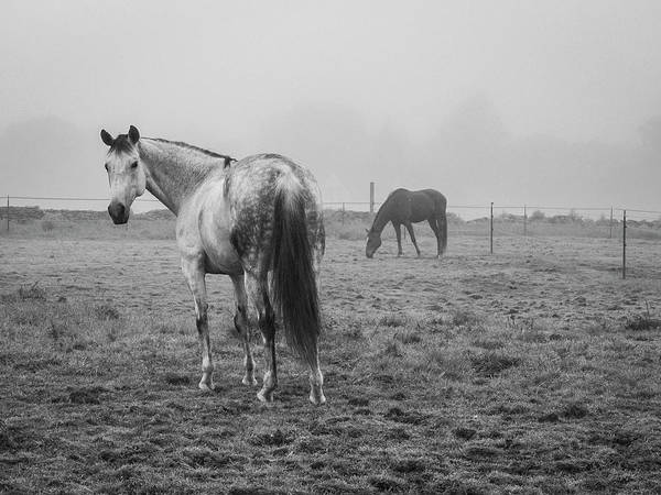 Photograph - Two Horses Bw by David Gordon